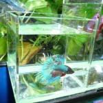 高知熱帯魚サービス