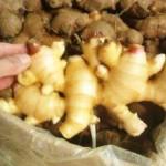 高知水田農園の生姜